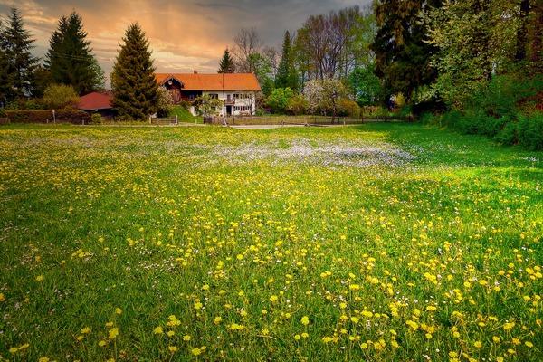 Jak opóźnić menopauzę? Trzeba mieszkać w zielonej okolicy [fot. Albrecht Fietz from Pixabay]