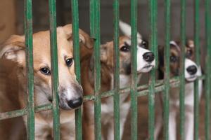 Jak poprawić sytuację bezdomnych zwierząt [© Roman Samokhin - Fotolia.com]