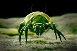 Jak pozbyć się roztoczy? [© Sebastian Kaulitzki - Fotolia.com]