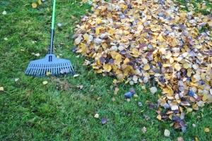 Jak przygotować ogród do sezonu zimowego? [Fot. bnorbert3 - Fotolia.com]
