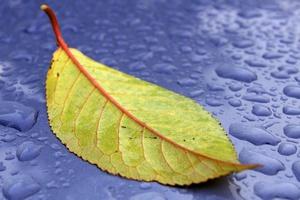 Jak radzić sobie z jesienną depresją? [© Pawel Strykowski - Fotolia.com]