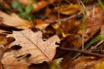 Jak sobie radzić z jesiennym przesileniem [© Maksim Shebeko - Fotolia.com]