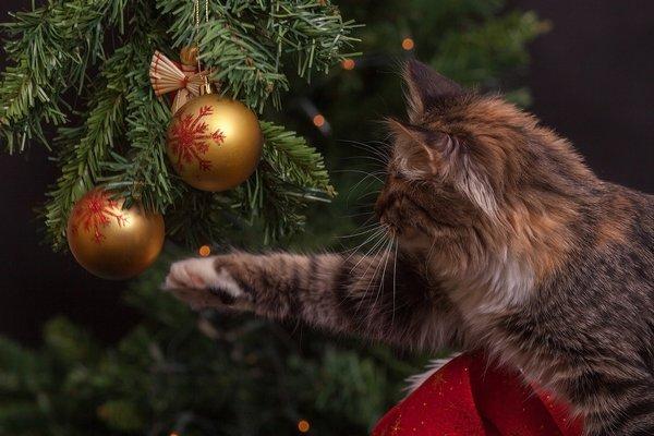 Jak trzymać kota z daleka od choinki [fot. Myshun z Pixabay]