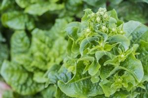 Jak uniknąć udaru - trzeba jeść zielone warzywa liściaste [Fot. Nipaporn - Fotolia.com]