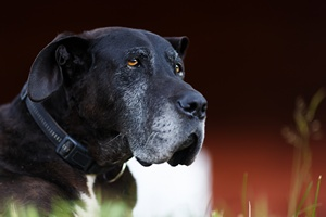 Jak zadbać o starzejącego się zwierzaka. Osiem ważnych zasad [© Castenoid - Fotolia.com]
