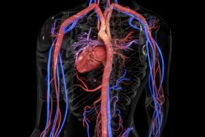 Jak zdrowy układ krążenia chroni przed demencją [Fot. 7activestudio - Fotolia.com]