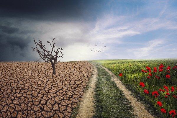 Jak zmiany klimatyczne zgrażają zdrowiu  [fot. enriquelopezgarre from Pixabay]