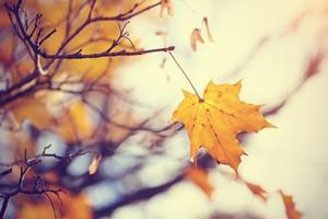 Jak zwalczyć jesienną depresję - 4 sposoby [Jesień, ©  Azaliya (Elya Vatel) - Fotolia.com]