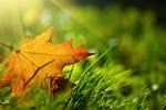 Jak zwalczyć jesienno-zimowy smutek [© Konstantin Sutyagin - Fotolia.com]