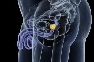 Jakie są objawy raka prostaty [Fot. Anatomy Insider - Fotolia.com]