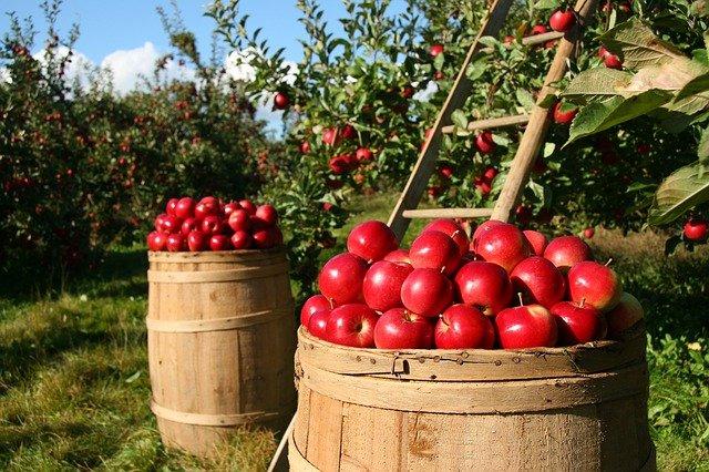 Jedz jabłka. Możesz zmniejszyć ryzyko demencji [fot. lumix2004 from Pixabay]