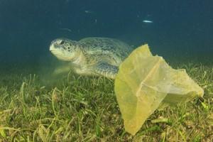 Jedząc ryby, dostarczasz sobie... plastiku! [Zanieczyszczenia oceanu, © Richard Carey - Fotolia.com]