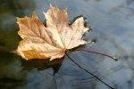 Jesień sprzyja infekcjom - jak się przed nimi ochronić