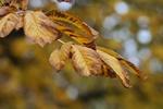 Jesień i zima - ciężki okres dla chorych psychicznie [© Mladenov - Fotolia.com]