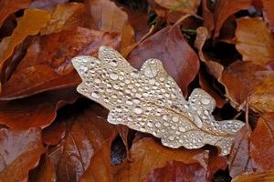 Jesienna chandra czy depresja?  [© annalovisa - Fotolia.com]