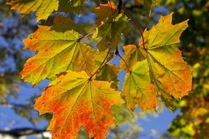 Jesienna zmiana czasu dobra dla serca [© Roman Milert - Fotolia.com]