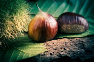 Jesienne przysmaki: kasztany jadalne [© Silvano Rebai - Fotolia.com]