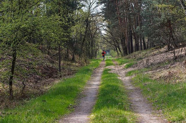 Jogging (niezbyt intensywny) sprzyja długowieczności [fot. summa z Pixabay]