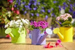Kalendarz ogrodniczy: czerwiec [© T.Tulik - Fotolia.com]