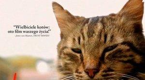 """Kedi"" - koty w Stambule [fot. Kedi]"