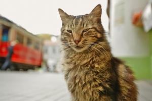 Kedi fot. M2 Films