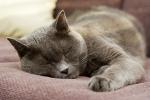 Kilka faktów na temat snu [© Kati Molin - Fotolia.com]