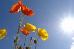 Kilka interesujących faktów na temat witaminy D [© Uschi Hering - Fotolia.com]
