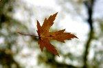 Kilka sposobów na jesienno-zimowe osłabienie nastroju