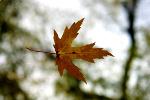Kilka sposobów na jesienno-zimowe osłabienie nastroju [Š Oleg Belyakov - Fotolia.com]