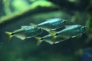 Klucz do problemu otyłości - strategia przybierania na wadze ryb  [© Vladimir Wrangel - Fotolia.com]