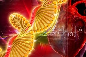Komórki maczierzyste pomogą w leczeniu choroby niedokrwiennej serca?  [© 4designersart - Fotolia.com]