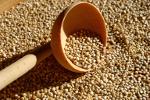 """Komosa ryżowa (quinoa) - prozdrowotne właściwości """"złota Inków"""" [© nool - Fotolia.com]"""