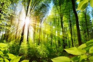 Kontakt z naturą - oto, co da ci poczucie szczęścia [Fot. Smileus - Fotolia.com]