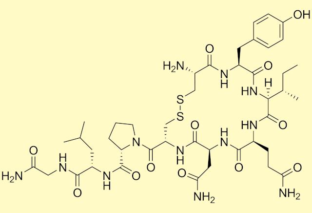 """Koronawirus - pomoże """"hormon miłości""""? [fot. Wikipedia, PD]"""