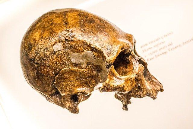 Koronawirus: ciężka forma Covid-19 w spadku po neandertalczykach? [fot.  Josch Nolte from Pixabay]
