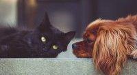 Koronawirus: domowe zwierzęta nie stanowią zagrożenia
