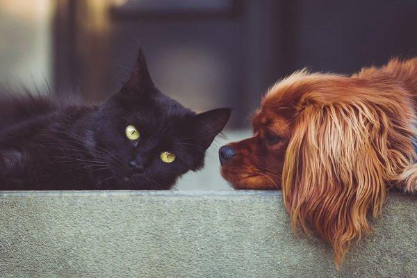 Koronawirus: domowe zwierzęta nie stanowią zagrożenia [fot. StockSnap from Pixabay]