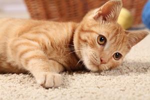 Koty - czego o nich nie wiemy [© Magdalena Kucova - Fotolia.com]