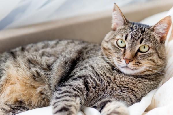 Koty umieją czytać ze wzroku ludzi? [Fot. Nichizhenova Elena - Fotolia.com]
