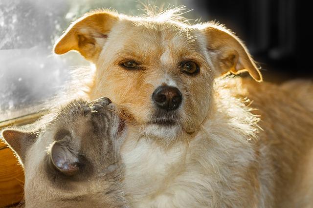Kto ma zwierzęta domowe, rzadziej choruje na serce [fot. Peter Morth from Pixabay]