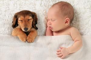 Kup wnukowi psa. Będzie mniej narażony na alergię [© Barbara Helgason - Fotolia.com]