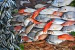 Kwasy omega-3 chronią przed nieprawidłowym rytmem serca [© Rechitan Sorin - Fotolia.com]