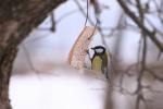 Mądre dokarmianie ptaków zimą [© Ints - Fotolia.com]