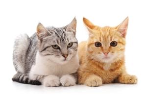 Masz alergię na koty, a chcesz zatrzymać tego zwierzaka? Jest na to sposób [Fot. voren1 - Fotolia.com]