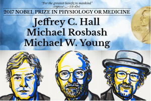 Jeffrey C. Hall, Michael Rosbash i Michael W. Young, fot. nobelprize.org