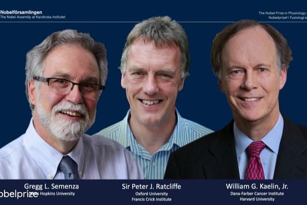 Medyczny Nobel 2019 za odkrycie mechanizmów umożliwiających leczenie nowotworów [fot. William G. Kaelin Jr., Sir Peter J. Ratcliffe i Gregg L. Semenza / nobelprize.org]