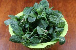 Międzynarodowy Dzień Szpinaku - dlaczego warto go jeść? [Fot. fotoXS - Fotolia.com]