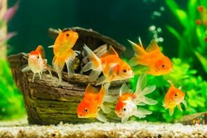 Młodość i witalność zależy od ryb [Ryby, © Satit _Srihin - Fotolia.com]