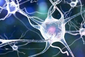 Mózg tworzy nowe komórki nawet w sędziwym wieku [Fot. Kateryna_Kon - Fotolia.com]