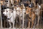 NIK: bardzo źle w schroniskach dla zwierząt [© thongsee - Fotolia.com]